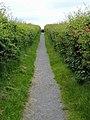 Path to Bryn Celli Ddu Burial Chamber (3000 BC), Llanddaniel Fab, Holy Island (507300) (33120419796).jpg