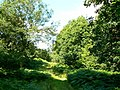 Path west through Bentley Wood - geograph.org.uk - 491706.jpg