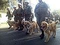 Perros chilenos de rescate de terremotos 01.jpg