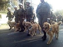 perros de busqueda y rescate