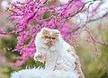 Persian Cat In Flowers (50434591271).jpg
