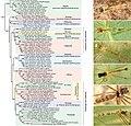 Pholcidae (10.3897-zookeys.789.22781) Figure 10.jpg