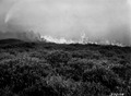 Photograph of a Forest Fire - NARA - 2128138.tif