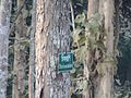 Picher 15 Satchari National Park.jpg