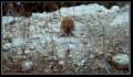 PikiWiki Israel 40532 hedgehog.png