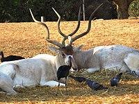 PikiWiki Israel 53065 wildlife animals.jpg