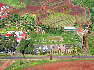 Dole Food Company - Dole Plantation Pineapple Maze