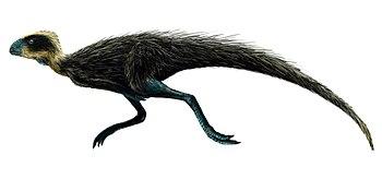 Pisanosaurus.jpg