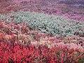 Plantes impressionnistes.jpg