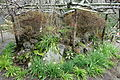 Plants - Hokai-ji - Kamakura, Kanagawa, Japan - DSC08472.JPG