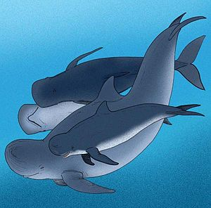 Blunt-snouted dolphin - Artist's reconstruction
