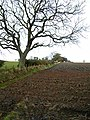 Ploughed field at Wallhouses - geograph.org.uk - 1027211.jpg