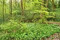 Plymbridge Woods (3264).jpg