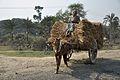 Pony Carrying Haystack - NH-34 - Debagram - Nadia 2014-11-28 0006.JPG