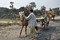 Pony Handle - NH-34 - Debagram - Nadia 2014-11-28 0005.JPG