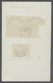 Porcellio olivieri - - Print - Iconographia Zoologica - Special Collections University of Amsterdam - UBAINV0274 098 08 0032.tif