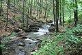 Potok koło Szczawnika - panoramio.jpg