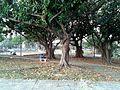 Praça General Porto Carneiro - Jaguaré 04.jpg