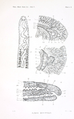 Proceedings of the Washington Academy of Sciences. Volume 3. Plate X.png