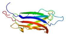 Protein FER1L3 PDB 2dmh.png