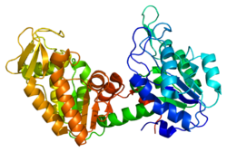 Protein PGK1 PDB 1hdi.png