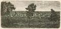 Punta Arenas - Vista jeneral - Chile Ilustrado (1872).png
