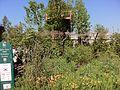 Quiet Time DMZ Forbidden Garden.jpg