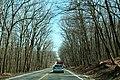 RI7sRoad-ForestOfDormantTrees (25669118178).jpg