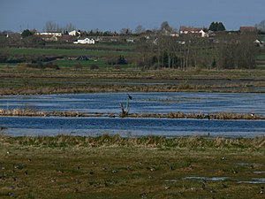 West Sedgemoor - A lake at the RSPB West Sedgemoor nature reserve