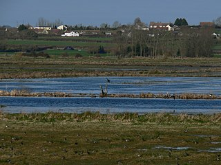 West Sedgemoor area of the Somerset Levels, in Somerset, England