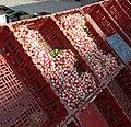 Radis en cagettes au marché de Provins.jpg