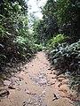 Rain forest 23.jpg