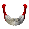 Ramus of the mandible - close up - anterior view.png