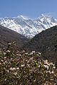Rhododendron and Everest Mountain Range.jpg