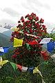 Rhododendron arboreum from Western Arunachal AJTJ.jpg