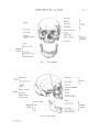 Richer - Anatomie artistique, 2 p. 8.png