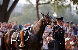 3rd U.S. Infantry Regiment (The Old Guard) - A member of Caisson Platoon escorts 'Sergeant York', the riderless horse used during the funeral procession for the 40th President of the United States, Ronald Reagan.