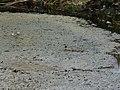 Riera Roja des del pont d'accés a les basses de Can Dimoni P1240966.jpg