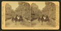 Room for one more, Williams Canyon, Colorado, U.S.A, from Robert N. Dennis collection of stereoscopic views 2.png