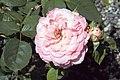 Rosa Liv Tyler 0zz.jpg