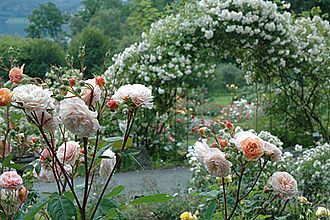 Flower garden - Flower garden in Norway,  Arboretum in Bergen