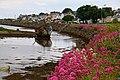 Rosses Point - Sligo (14.06.16) 12.jpg