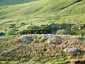 Ruined sheepfold - geograph.org.uk - 836709.jpg