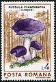 Russula cyanoxantha stamp-4292.jpg