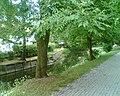 Rzeka Drwęca w Ostródzie - panoramio.jpg