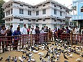 Sacred Pigeons.jpg