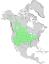 Salix exigua range map 0.png