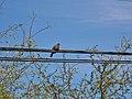 San Pedro de Atacama-CTJ-IMG 6732.jpg