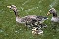 Sandringham 23-05-2011 (5761323786).jpg