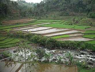 Tasikmalaya - Image: Sawah Tasikmalaya